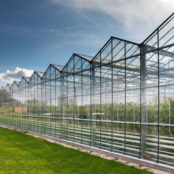 Инновационные тепличные комплексы из стекла