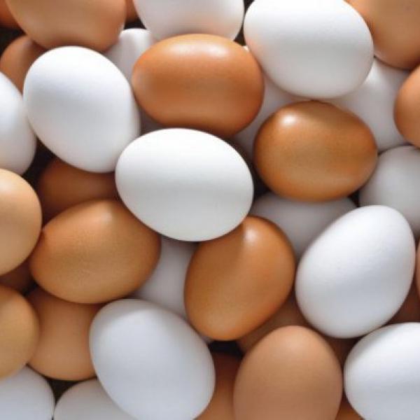 Яйцо птиц