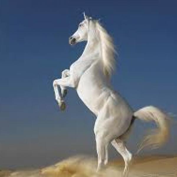 Чистопородные лошади