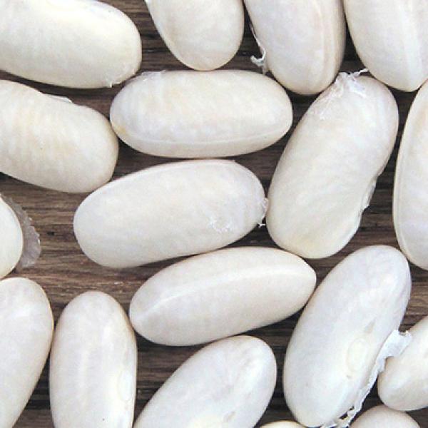 Фасоль Нэви (Navy bean)