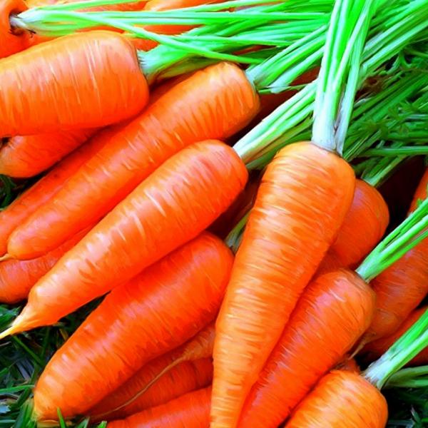 Морковь свежая