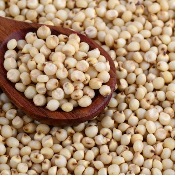 Сорго — род однолетних и многолетних травянистых растений семейства Злаки, или Мятликовые.