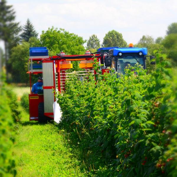 Raspberry, blueberry, blackberry harvester KAREN