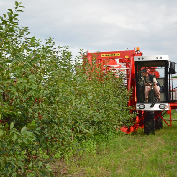 Sour cherry, plum harvester FELIX