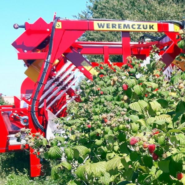 Raspberry harvester NATALIA-V