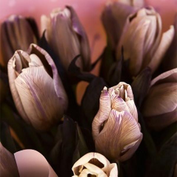 Тюльпан сухоцвет