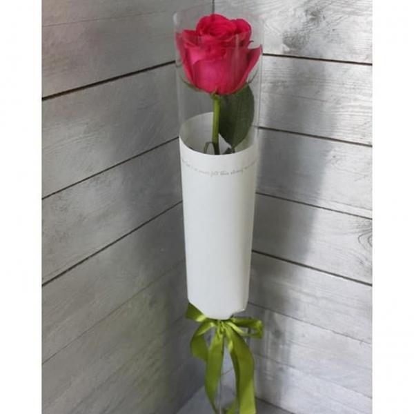 Розы голландские длиной не менее 80-100 см