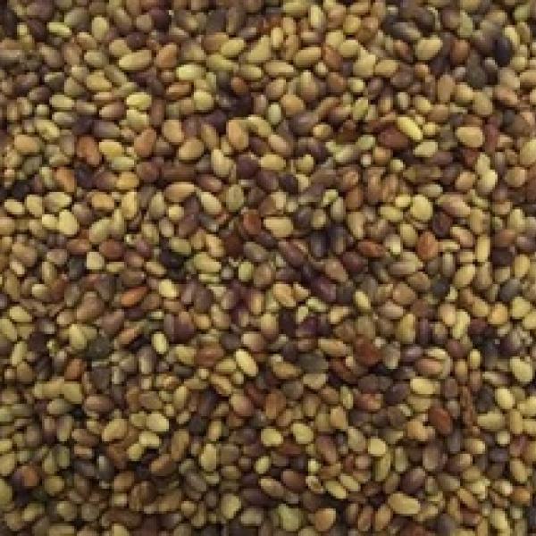 Семена клевера персидского