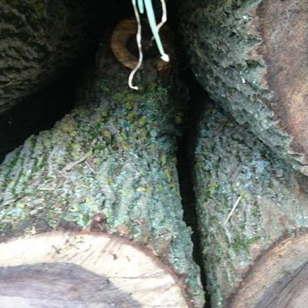 Круглый лес орех