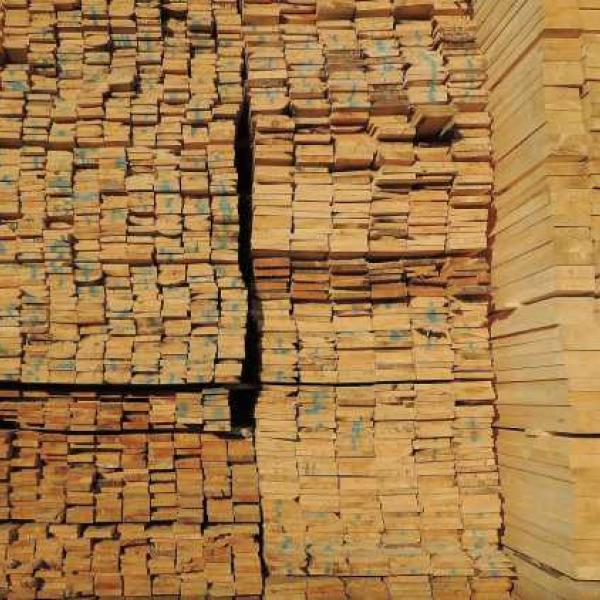 Тсуга — род хвойных вечнозелёных деревьев семейства Сосновые