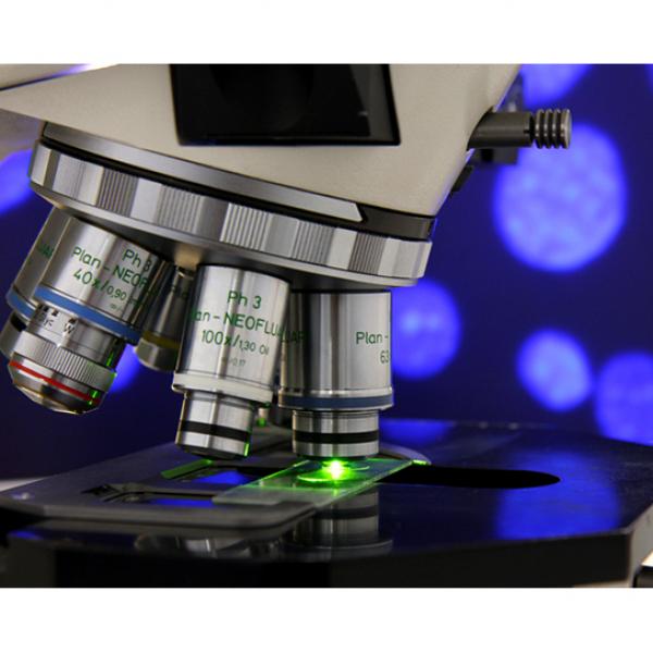 Иммунофлюоресцентные исследования